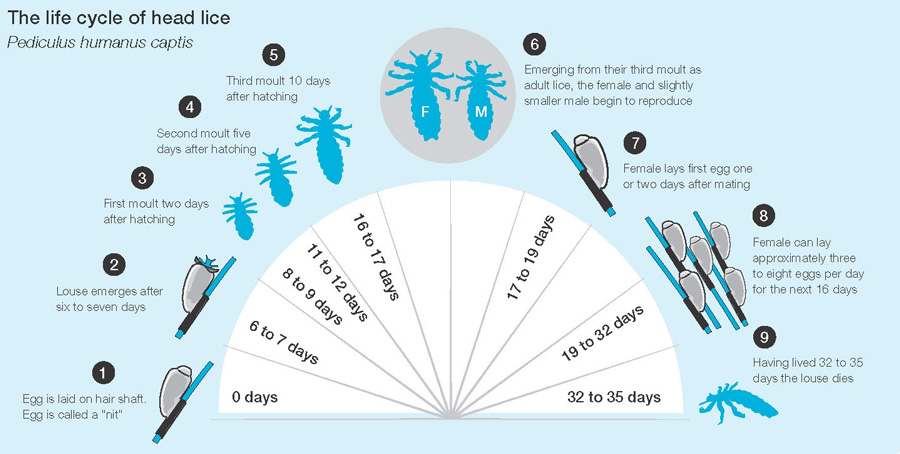 The Life Cycle of Lice